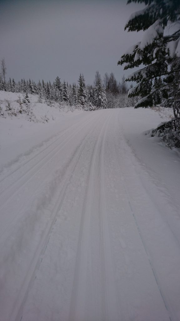 Skidor; Vasaloppet