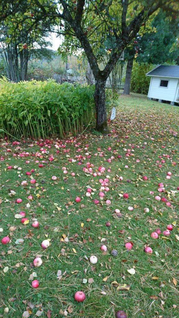 äpplena ramlar ner