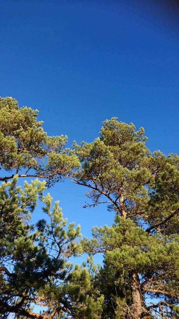 Sol, blå himmel